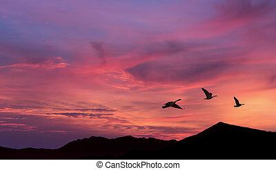 Flock of cranes spring or autumn migration