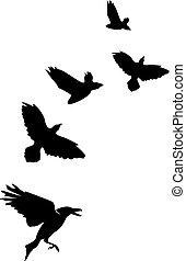 Flock of crows ravens