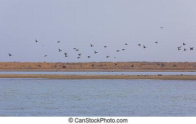 Flock of ducks flying over the lake