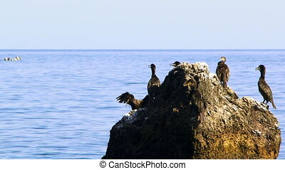 Flock of ducks on a rock