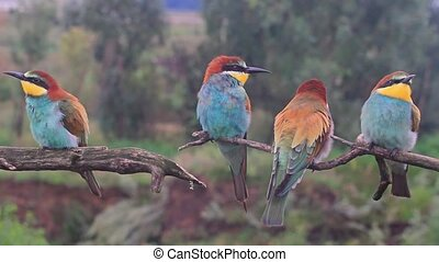flock of exotic colored birds , wildlife and beautiful colors