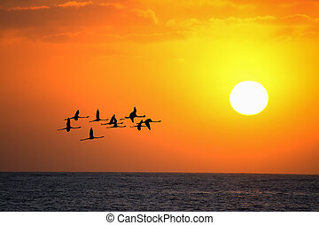 flamingos flying at sunset under a bright sun