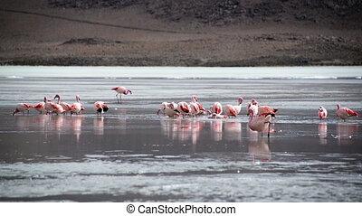 Flock of Flamingos in a Lake