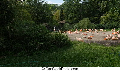 Flock of flamingos in the park