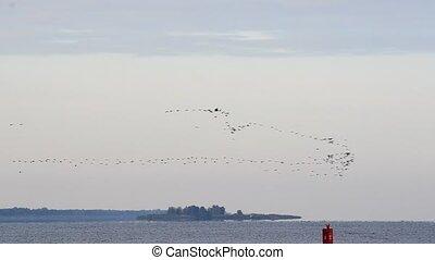Flock of flying birds arrange in V-formation for migration -...