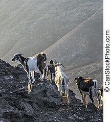 flock of goats in the mountains