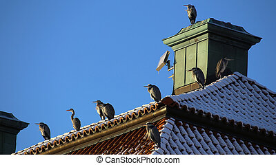 Flock of gray herons (Ardea cinerea) sitting on historic ...