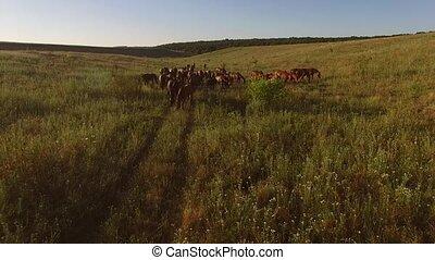 Flock of horses on meadow.