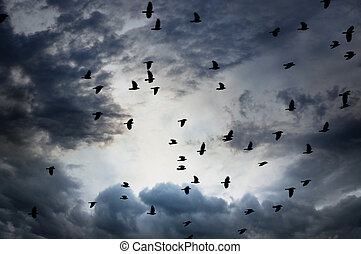 flock of jackdaws on gray and blue moody sky