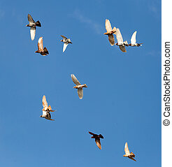 Flock of pigeons against the sky