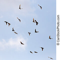 Flock of pigeons against the sky with clouds