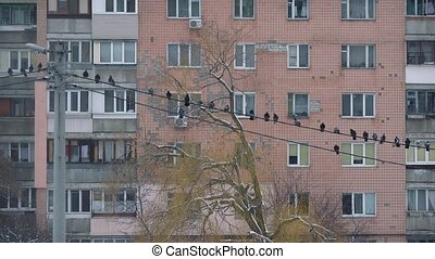 Flock of pigeons come down to electric wires on background...