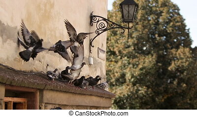 Flock of pigeons flying on the square in the city - Flock of...