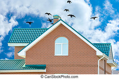 flock of pigeons on the roof