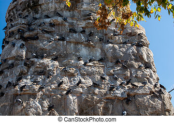 Flock  of pigeons sitting on the rocks of a wall in the street
