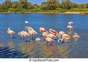Flock of pink flamingos arranged to sleep - Flock of...