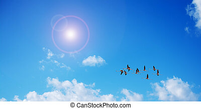 pink flamingos flying under the sun