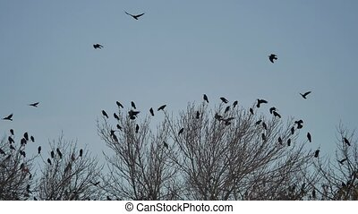 flock of raven birds sitting on a tree dry branches of trees...