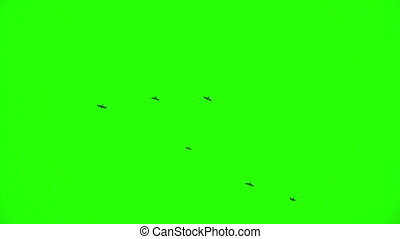 Flock of Ravens, Chroma Key