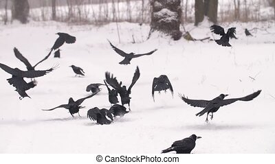 Flock of birds taking of from the ground at winter
