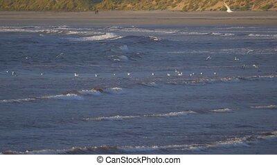 Flock Of Seagulls At Scottish Beach, Real 200fps SlowMo -...