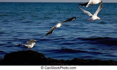 Flock of seagulls flies into the sky, making a big sweep of...