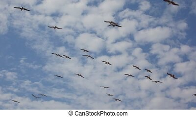 flock of seagulls flying in blue sky with clouds