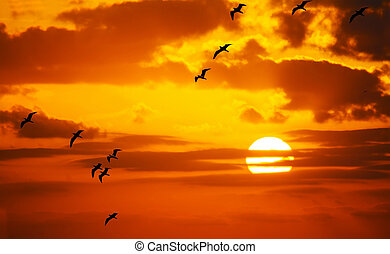 flock of seagulls flying in the sun