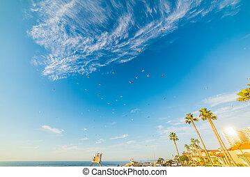 Flock of seagulls flying over La Jolla