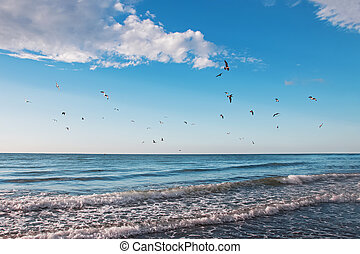Flock of seagulls flying over the sea
