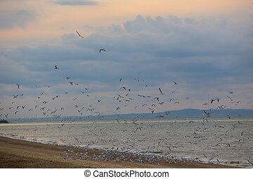 seagulls flying over the sea on sunset.