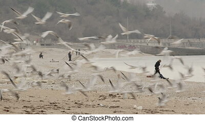 Flock of seagulls flying up from the seaside