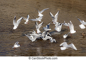 flock of seagulls in a sunny day