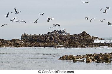 Flock of seagulls in flight