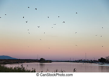 Flock of Seagulls in Flight over a River at Sunset