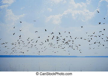 flock of seagulls in sky flying over water