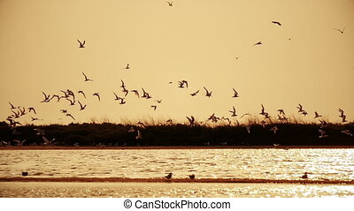 flock of seagulls in the sky at sunset over the river  1