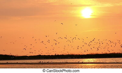 flock of seagulls in the sky at sunset over the river