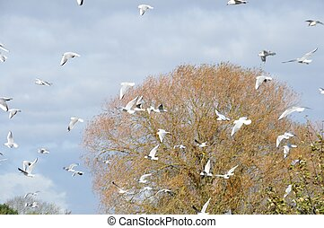 Flock of seagulls on a field