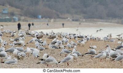 Flock of seagulls on empty beach