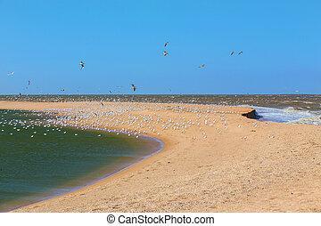 Flock of seagulls, sea, sand.
