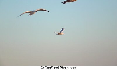 Flock of seagulls soars into the blue sky and hovers in the open space. Slow motion