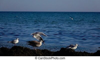 Flock of seagulls stands on the seashore and looks into the distance and begins to take off. Slow motion