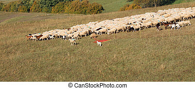 flock of sheep grazes in the mountains