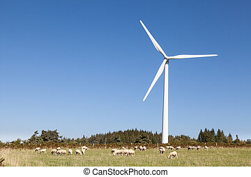 Flock of sheep grazing below a wind turbine in an agricullture and sustainable energy concept