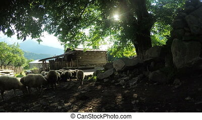 Flock of sheep in mountains