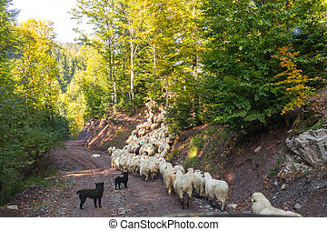 Flock of sheep in the forest