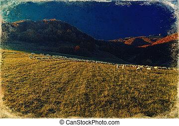 Flock of sheep on beautiful mountain meadow, old photo ...