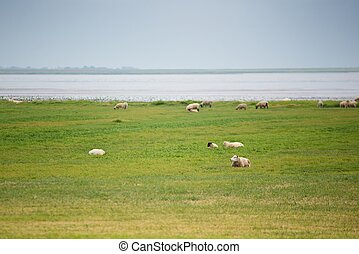 Flock of sheep on green meadow