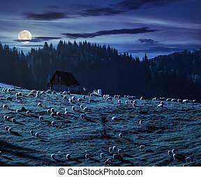 flock of sheep on the meadow near - flock of sheep on the...